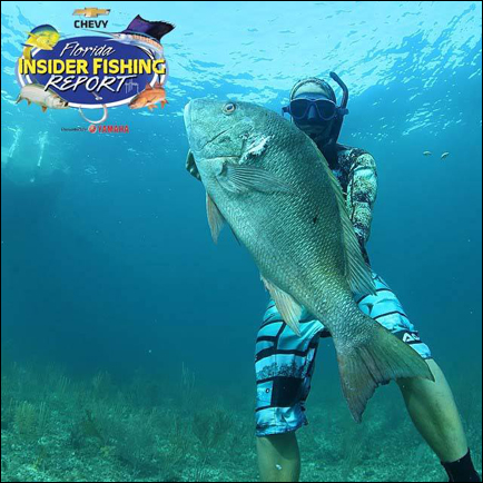 Spearfishing and Diving Featured This Week on the Chevy Florida Insider ... - The Ledger (blog)